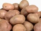 Cena brambor raketově stoupá. Čím je nahradit?